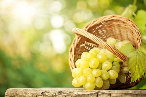 中国种植葡萄始于什么时候,到底是东汉还是西汉?